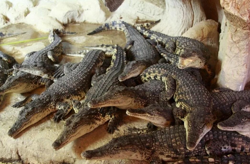 Ялтинский крокодиляриум фото 3