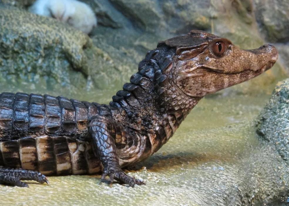 Ялтинский крокодиляриум фото 4